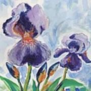 Iris Blooms Art Print