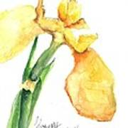 Iris Blooms  Art Print by Sherry Harradence