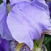 Iris Close Up 2 Art Print