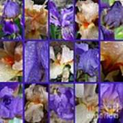 Iris Collage Art Print