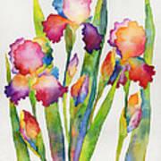 Iris Elegance Art Print