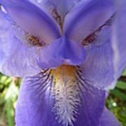 Iris Face Art Print