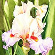 Iris Flower Dancing Petals Art Print