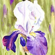 Iris Flower Purple Dance Art Print