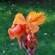 Iris In Autumn Art Print