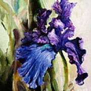 Iris In Bloom 2 Art Print