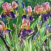Iris Inspiration Art Print by Zaira Dzhaubaeva