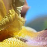 Iris Landscape Art Print