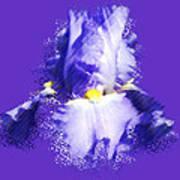 Iris Passementerie Art Print