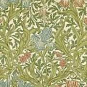 Iris Pattern Art Print