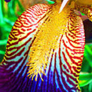 Iris Petal By Jan Marvin Art Print