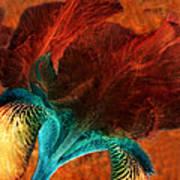 Iris Sonata 3 Art Print