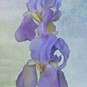 Iris Texture Art Print