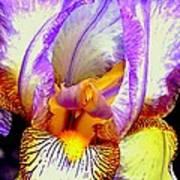 Iris Up Close And Personal Macro Art Print