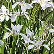 Irises Dancing In The Sun Painted Art Print