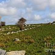 Irish Farms And Fields Art Print