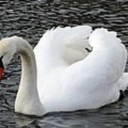 Isar Swan Art Print