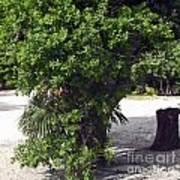 Island Tree Art Print
