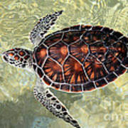 Island Turtle Art Print
