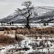 Isolation In Yellowstone Art Print
