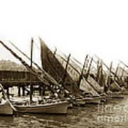 Italian Fishing Boats Fishermen's Wharf San Francisco Circa 1903 Art Print