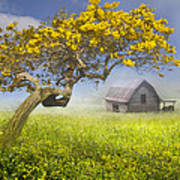 It's A Beautiful Day Art Print by Debra and Dave Vanderlaan