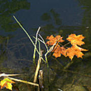 It's Over - Leafs On Pond Art Print