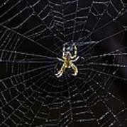 Itsy Bitsy Spider My Ass 2 Art Print by Steve Harrington
