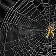 Itsy Bitsy Spider My Ass 3 Art Print by Steve Harrington