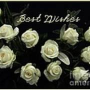 Ivory Roses Greeting  Art Print
