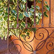 Ivy And Old Iron Gate Art Print