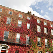 Ivy Covered Georgian Style Building In Art Print