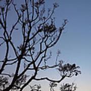 Jacaranda Sunset Art Print by Rona Black