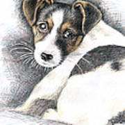 Jack Russell Puppy Art Print