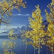 1m9206-jackson Lake And Aspens, Wy Art Print