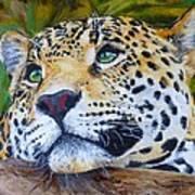 Jaguar Big Cat Original Oil Painting Hand Painted 8 X 10 By Pigatopia Art Print