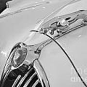 Jaguar Hood Ornament In Black And White Art Print
