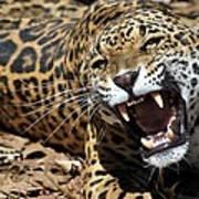 Jaguar Intensity Art Print