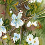 Jane's Apple Blossoms 1 Art Print
