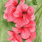 Jane's Flowers Art Print