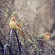 January Cardinals Art Print