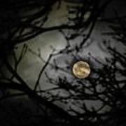 January Moon In Treetops Art Print