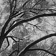 January Tree Art Print