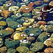 Japanese Garden Pool Rocks Art Print