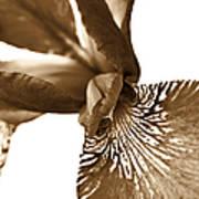 Japanese Iris Flower Sepia Brown 2 Art Print
