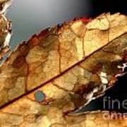Japanese Maple Leaf Brown - 4 Art Print