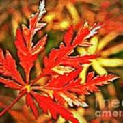 Japanese Maple Leaf  Art Print