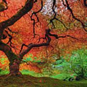 Japanese Maple Tree In Autumn Art Print