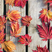 Japanese Maple Tree Leaves On Wood Deck Art Print by David Gn