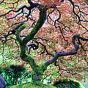 Japanese Tree In Garden Art Print